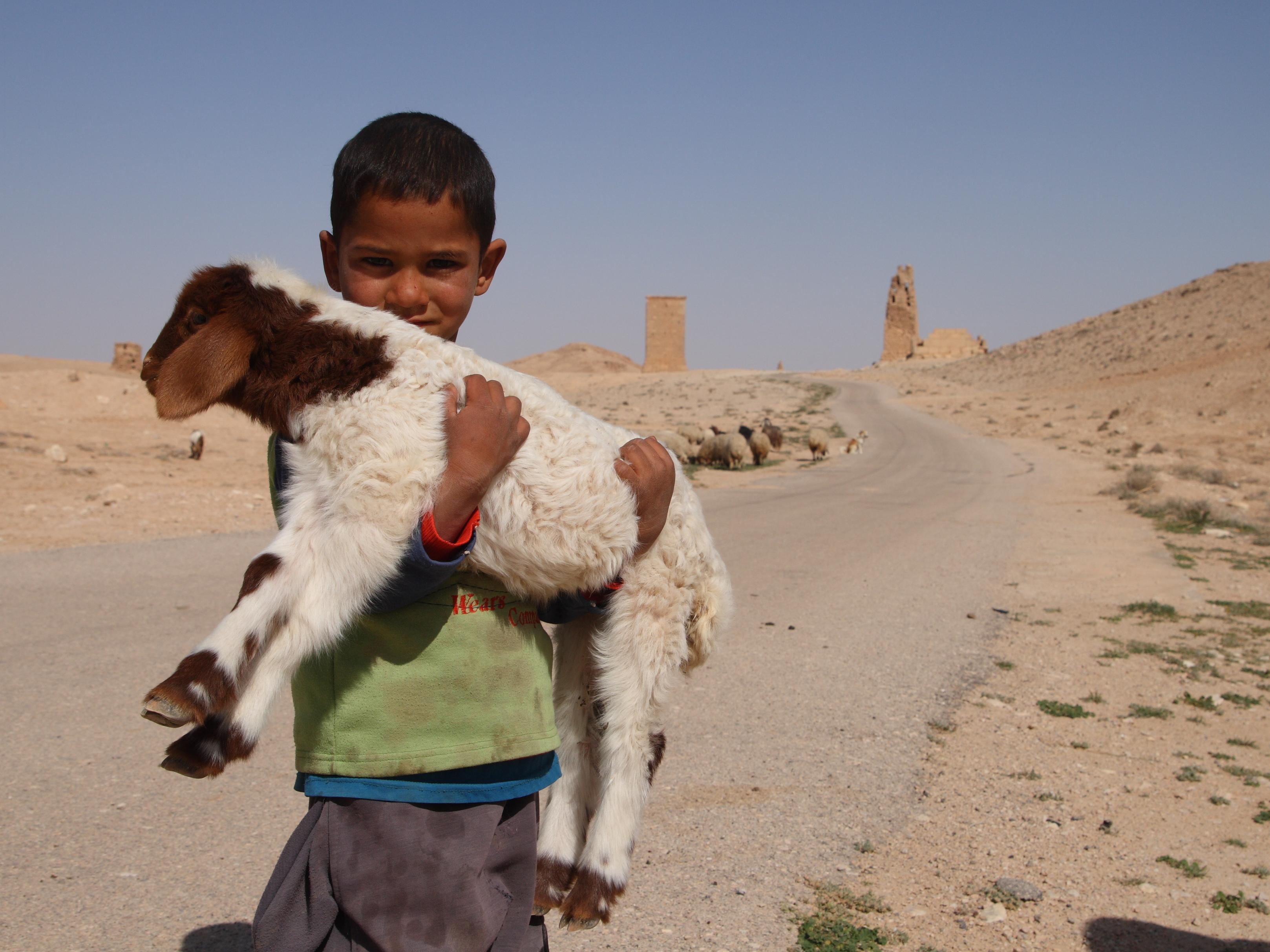 A modern day shepherd boy