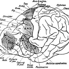 Chimpanzee Skull Diagram 1 Pole Contactor Wiring May 2015 Greencheck Page 2