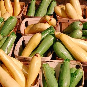 USDA summer squash
