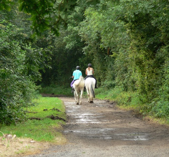English: Mere Lane, Oadby The horse riders are...