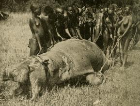hippopotame - tribu - nourriture