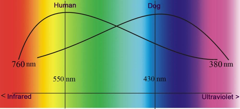 medium resolution of auge hund diagramm engl jpg