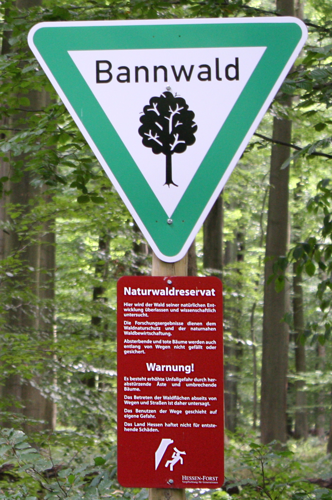 These ten tips will help you avoid bites. List Of Types Of Formally Designated Forests Wikipedia