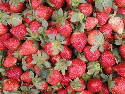 File:La Trinidad strawberries.jpg