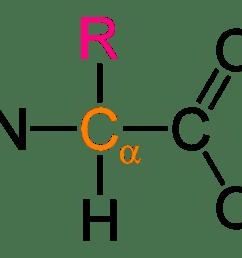 file alpha amino acid general 2d png [ 1100 x 741 Pixel ]