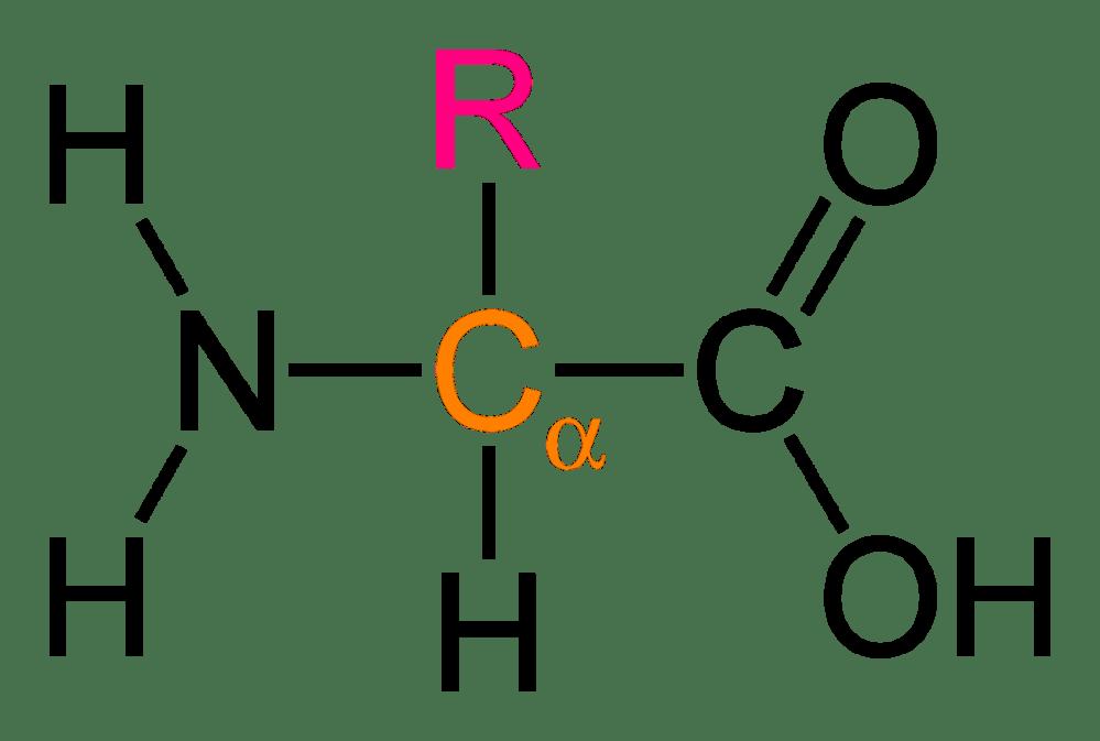medium resolution of file alpha amino acid general 2d png