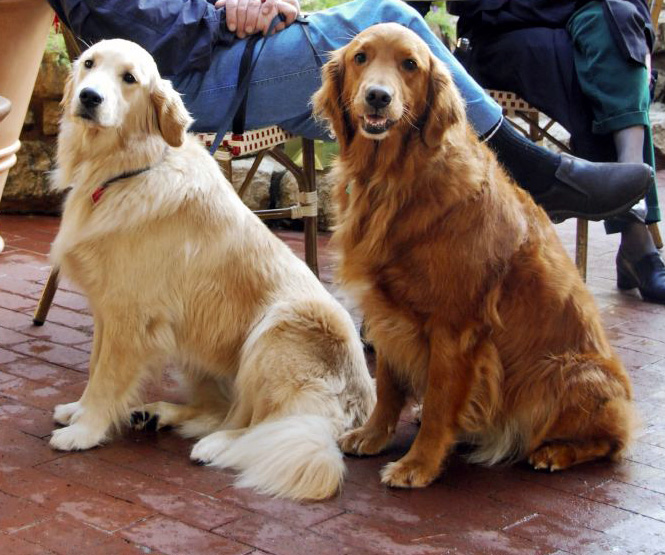 Therapy dogs. Image via Wikipedia.