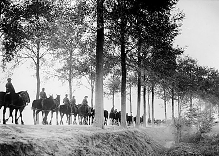 File:Mounted troops moving along the Ypres road.jpg