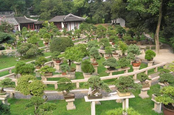 file bonsai forest gardens