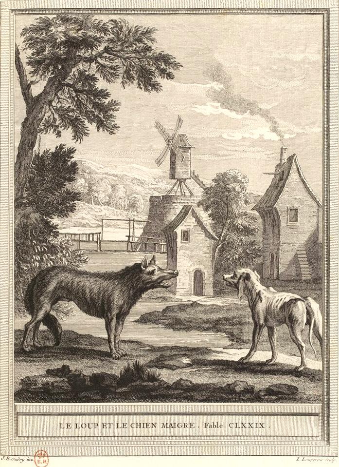 Le Loup Et Le Chien Pdf : chien, Chien, Maigre, Wikipédia