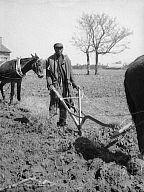 Title: Sharecropper plowing. Montgomery County...