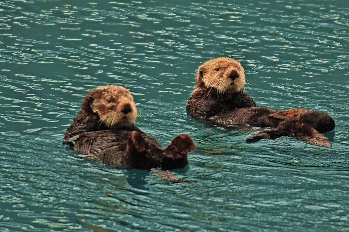 Sea Otters Good Dog Food Brands For Pitbulls