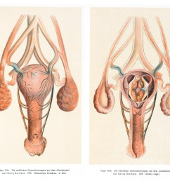 file image of the vagina uterus and womb wellcome l0043367 jpg [ 4968 x 4140 Pixel ]