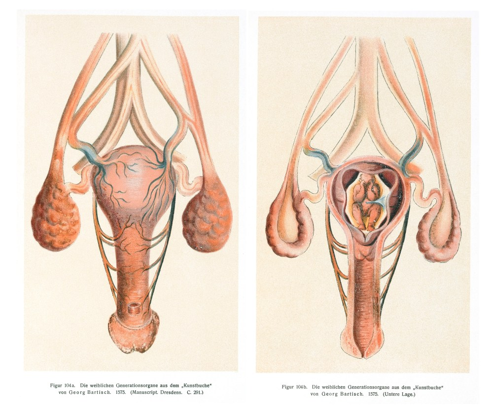 medium resolution of file image of the vagina uterus and womb wellcome l0043367 jpg