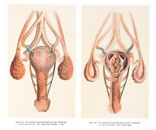 small resolution of file image of the vagina uterus and womb wellcome l0043367 jpg