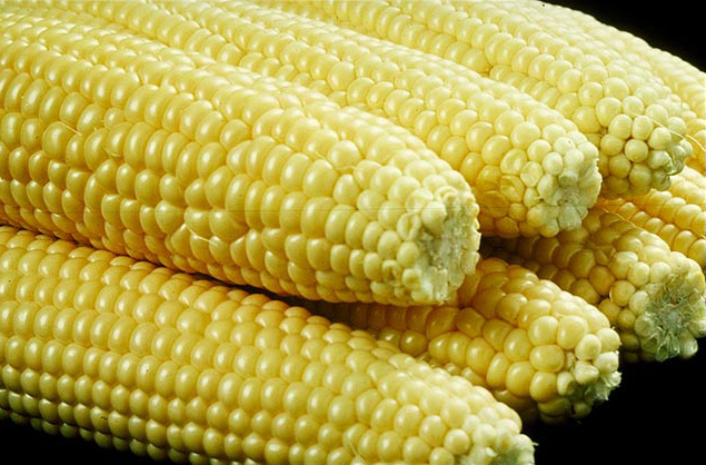sweet corn wikipedia