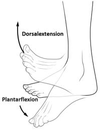 Dorsalextension || Med-koM