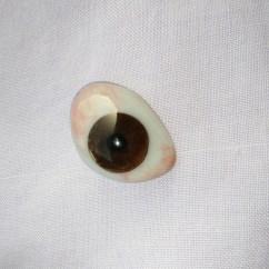 Diagram Of Artificial Eye Wiring For Toyota Hiace Radio Ocular Prosthesis Wikipedia
