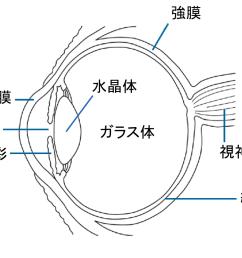 simple eye diagram radio wiring diagram u2022 sun diagram quiz [ 1024 x 839 Pixel ]