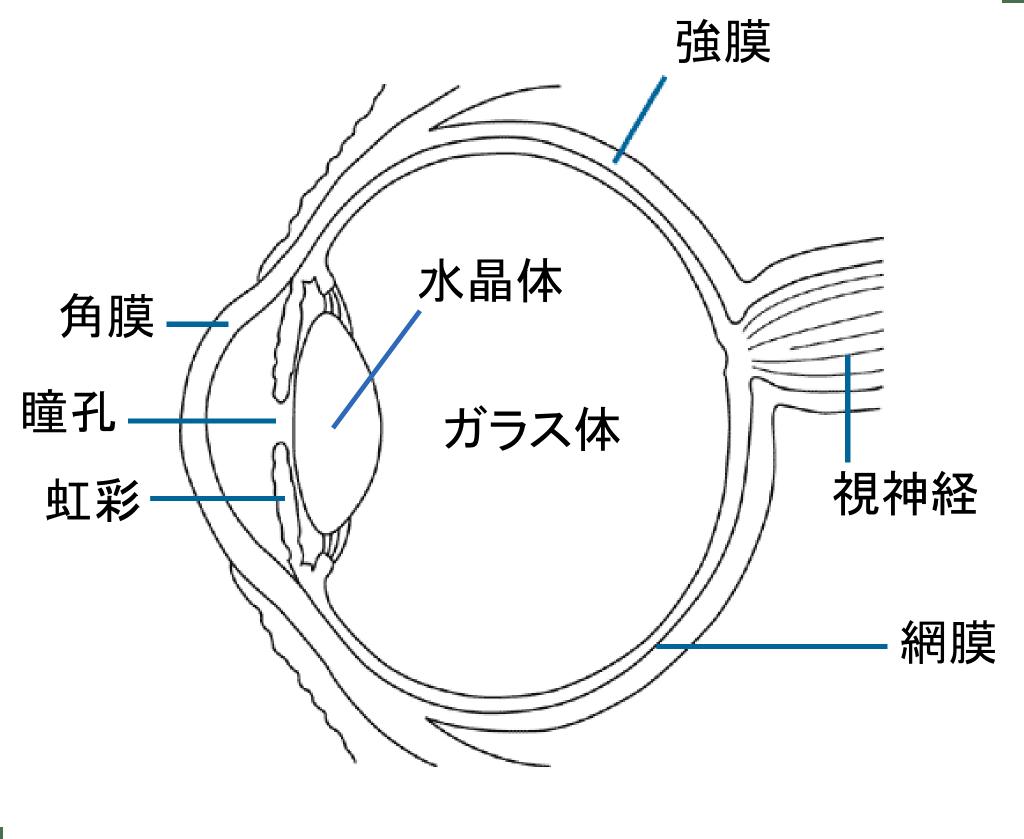 hight resolution of simple eye diagram radio wiring diagram u2022 sun diagram quiz