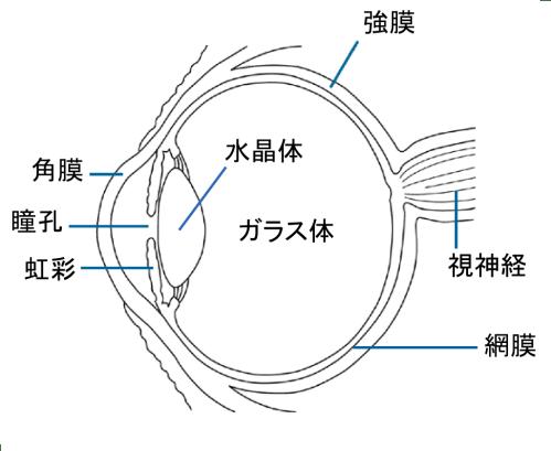 small resolution of simple eye diagram radio wiring diagram u2022 sun diagram quiz
