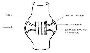 Anatomy and Physiology of AnimalsThe Skeleton  Wikibooks