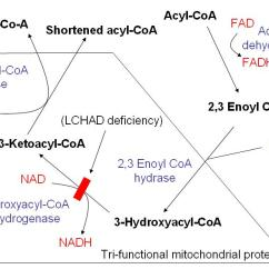Glycolysis Cycle Diagram Symbols Used In Electrical Wiring Diagrams Beta Oxidation - Wikipedia