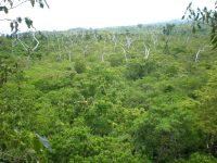 File:View from the top, Falealupo Rainforest canopy ...