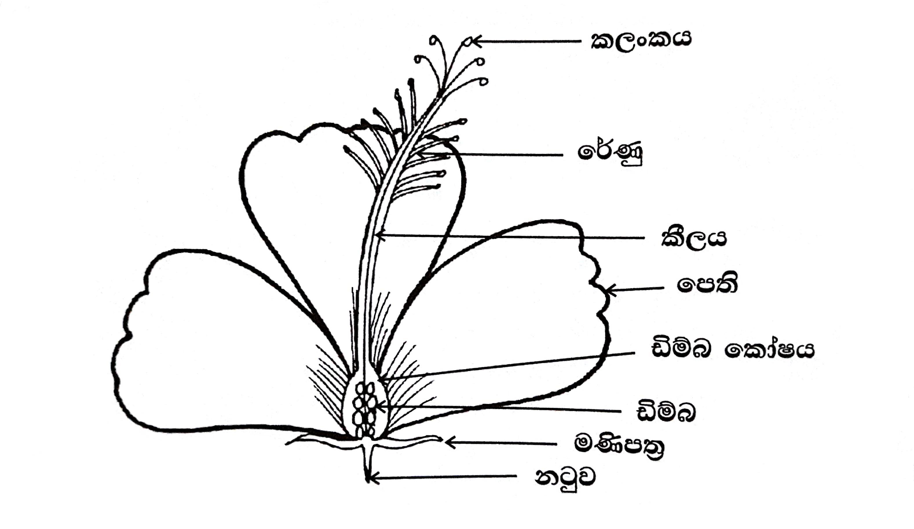 File Flower Parts Sinhala
