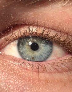 also eye color wikipedia rh enpedia