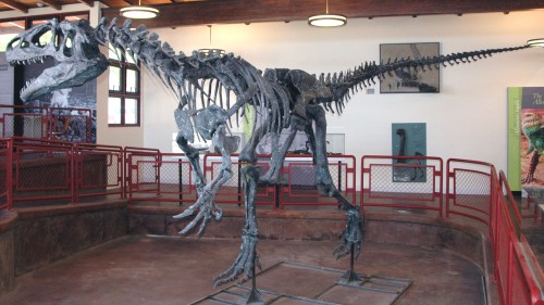 https://i0.wp.com/upload.wikimedia.org/wikipedia/commons/7/7f/Allosaurus_atrox_Cleveland-Lloyd_Quarry.jpg?resize=500%2C281&ssl=1