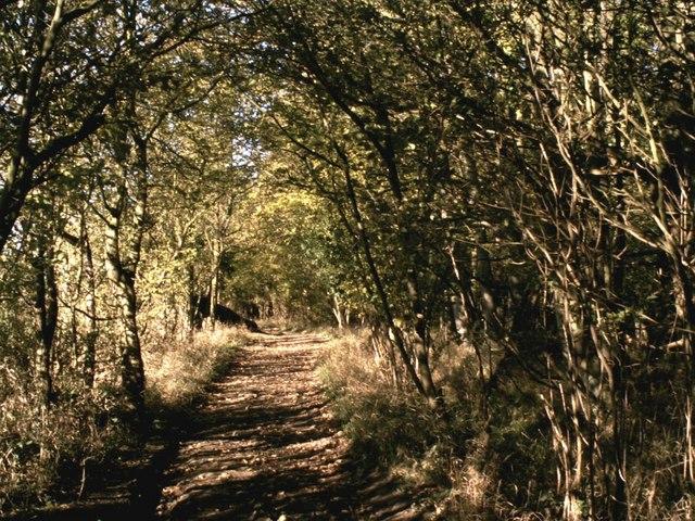 File:Dark Lane path - geograph.org.uk - 275666.jpg