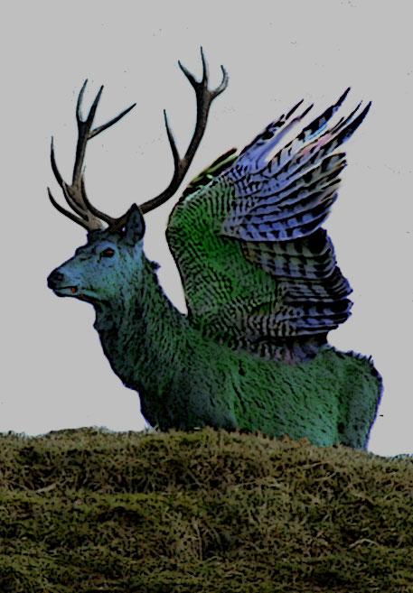 Moose Elk Hybrid : moose, hybrid, Peryton, Wikipedia