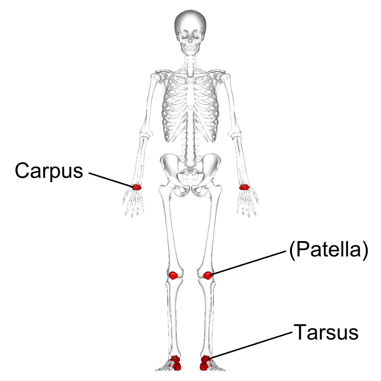All 206 Bones Worksheet
