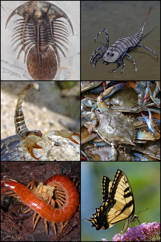 medium resolution of arthropod
