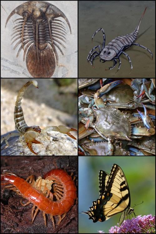 small resolution of arthropod