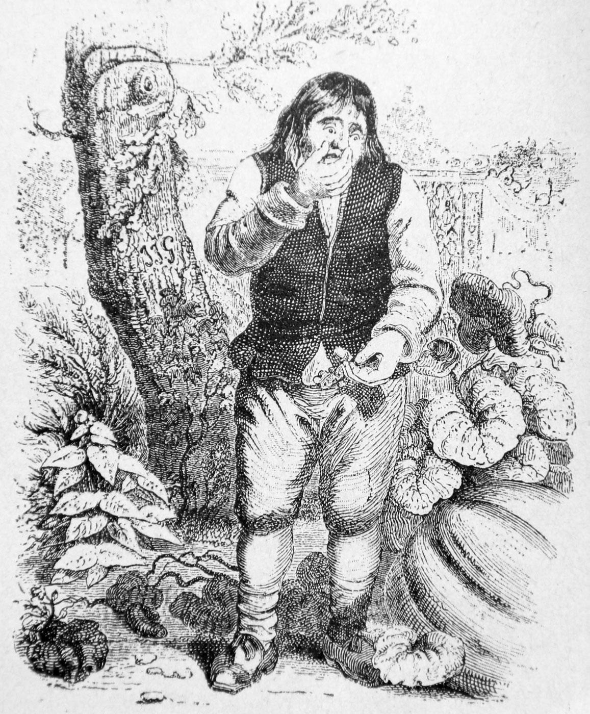 Le Gland Et La Citrouille : gland, citrouille, Gland, Citrouille, Wikipédia