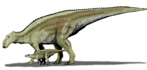 File:Maiasaura BW.jpg