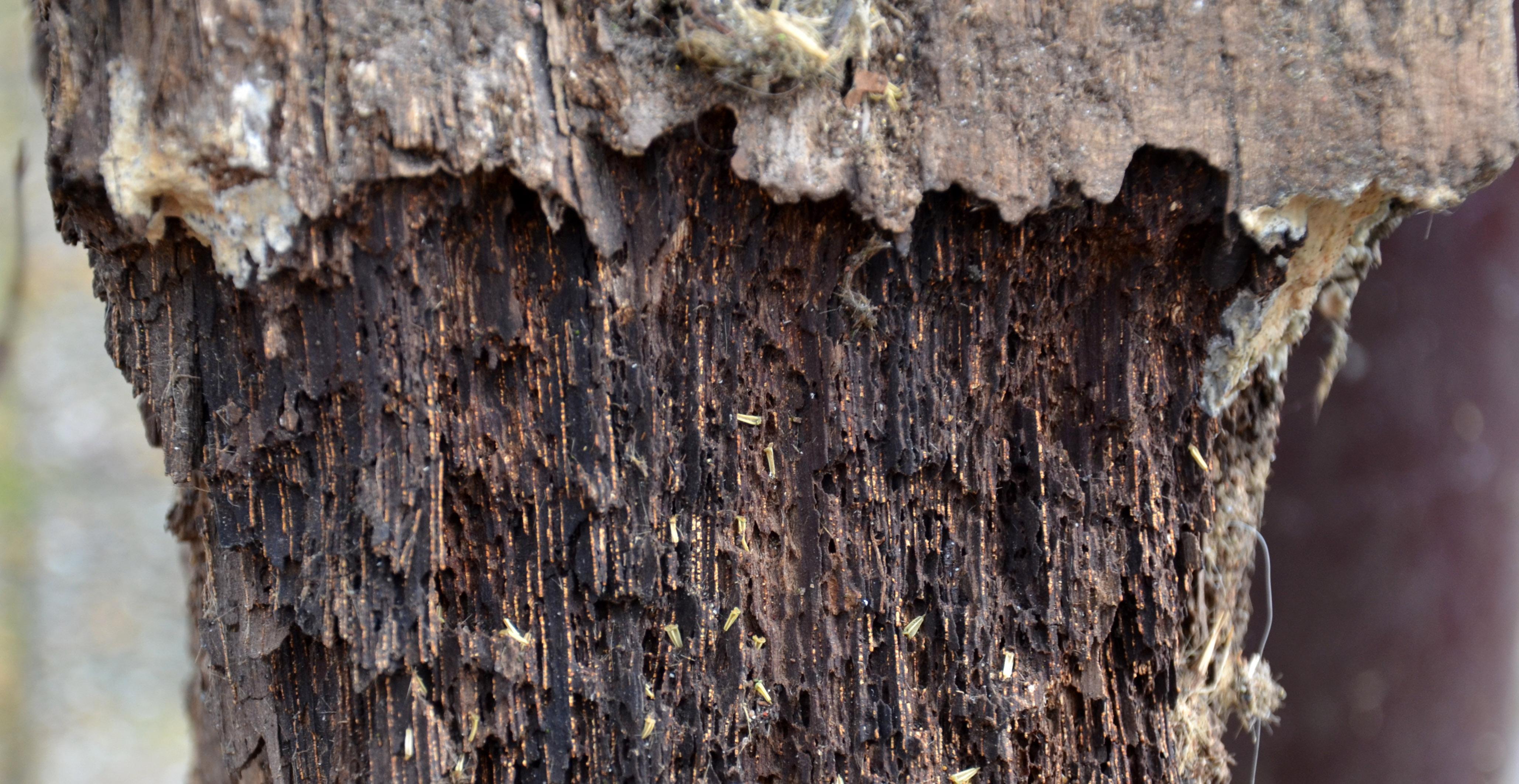 Cutting Pressure Treated Wood Indoors
