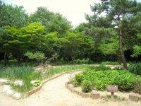 File:Botanical garden, Changgyeonggung - Seoul, Korea.jpg ...