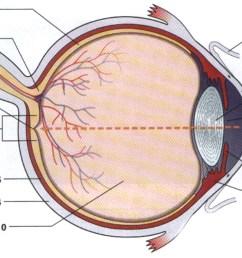 file eye anatomy jpg [ 1323 x 631 Pixel ]