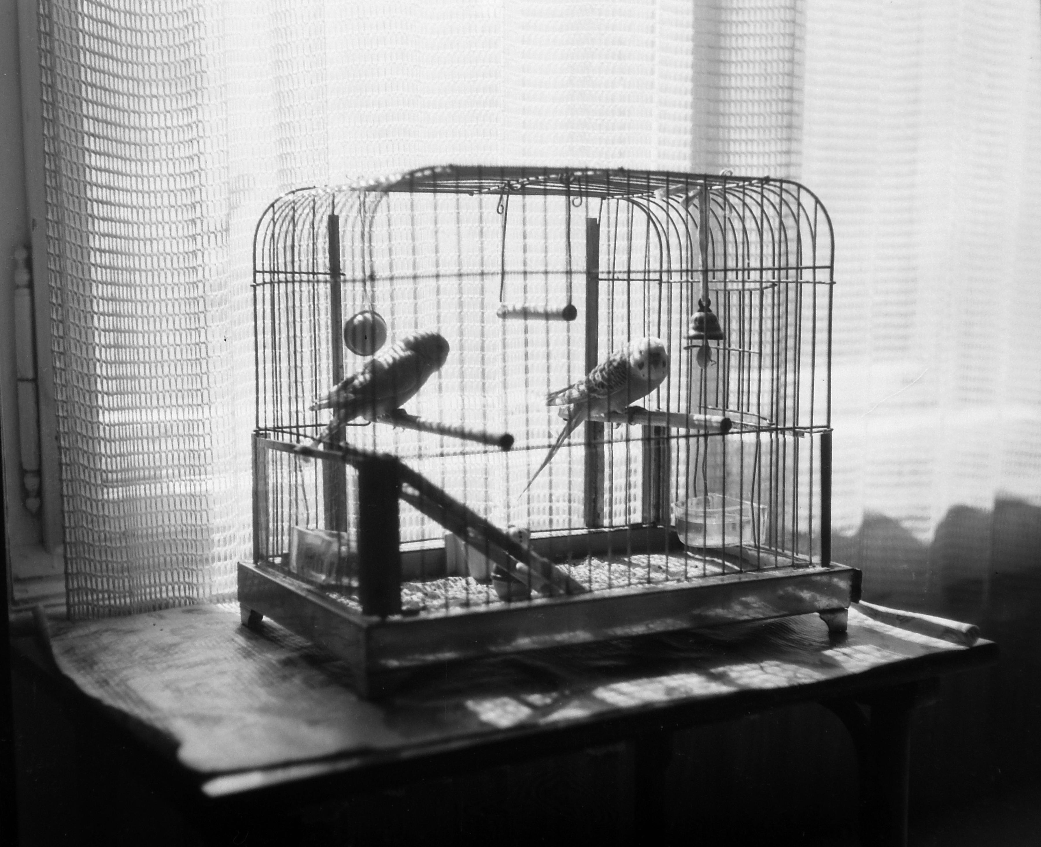 Interior Cage Home Bird
