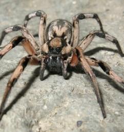 spider diagramme [ 2064 x 1312 Pixel ]
