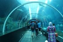 File Shark Seas . Aquarium Marine Life Park