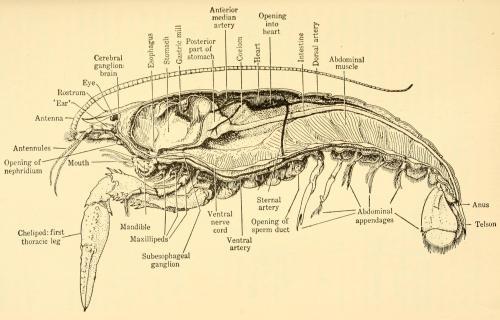 small resolution of crayfish diagram