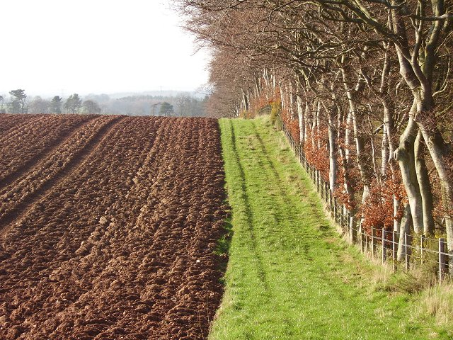 File:Field margin, Leaston - geograph.org.uk - 156217.jpg