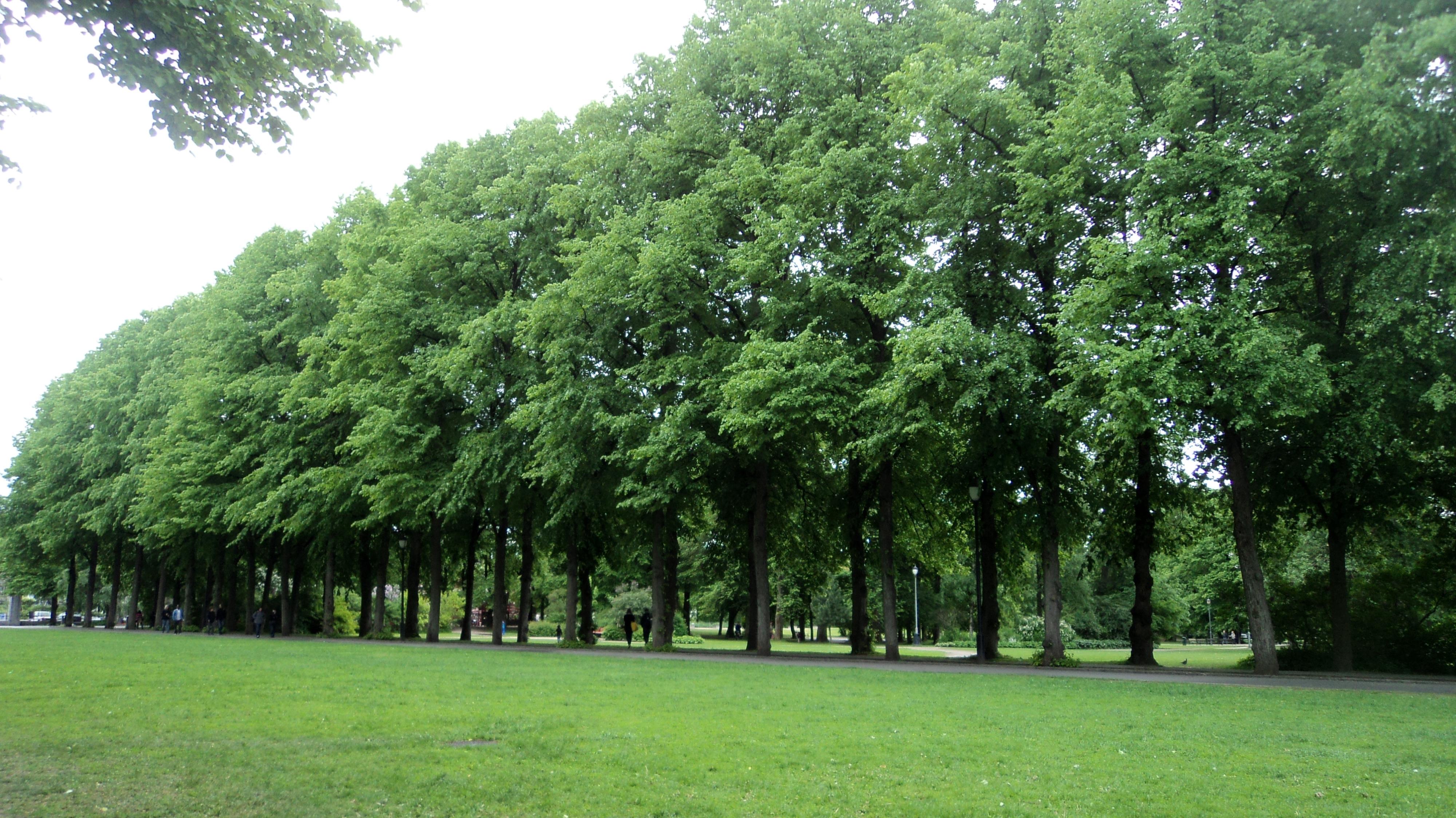 Filefrogner Park Treesjpg  Wikimedia Commons