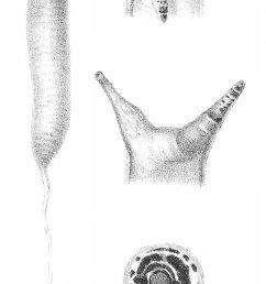 snail habitat diagram [ 1056 x 2040 Pixel ]