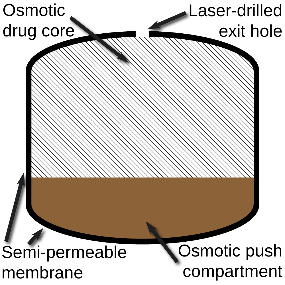 medium resolution of file push pull osmotic pump diagram png