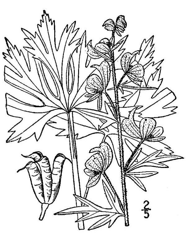 Herbaceous Flowering Plants Description